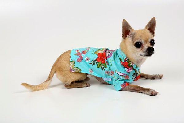 Kona Beach Turquoise Shirt - Click Image to Close
